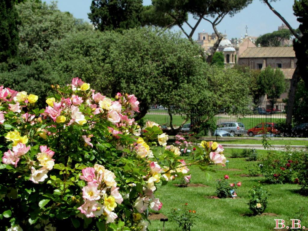 primavera_roseto