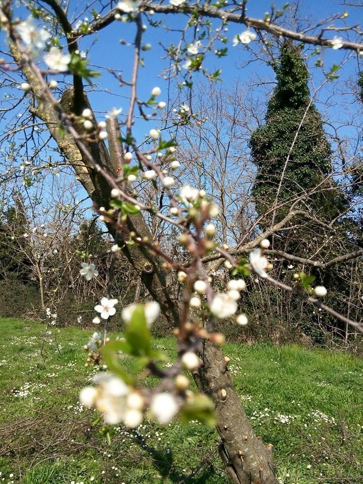 E' quasi primavera... Respira con Bags Free! - foto di Luca Zacchi