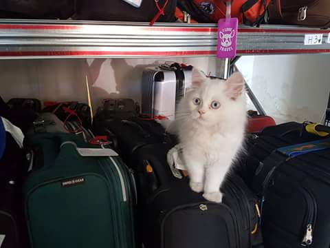 Enrique, the Bags Free Security Man, sorry, Cat!